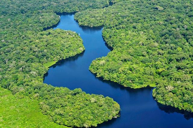 Hutan Hujan Amazon - Hutan Tertua di Dunia